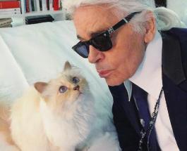 Как живет кошка по имени Шупетт - главная наследница Карла Лагерфельда