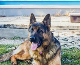 Трогательная история собаки которая спасла жизнь своему новому хозяину