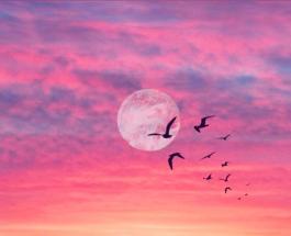 Полнолуние в Деве 27 февраля положительно повлияет на жизнь 3 знаков Зодиака