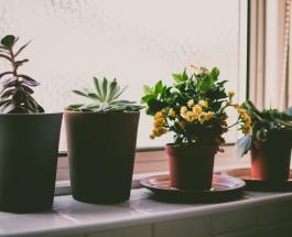 Почему не растут цветы на подоконнике: 8 возможных причин и способы решения проблемы