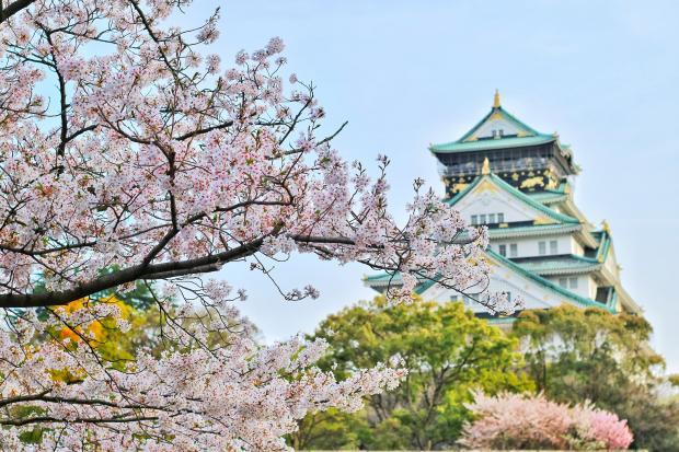 сакура и японский храм