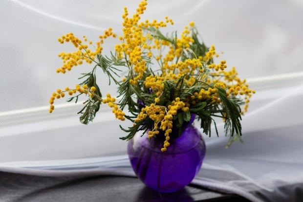 букет мимозы стоит в вазе