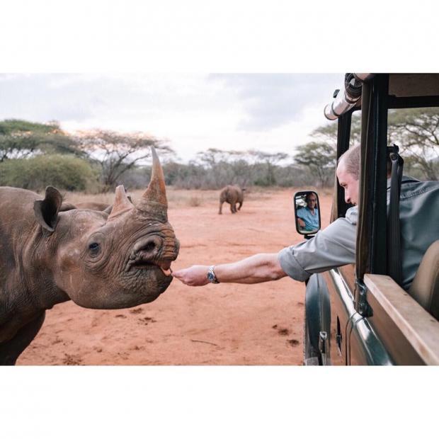 Принц Уильям кормит носорога