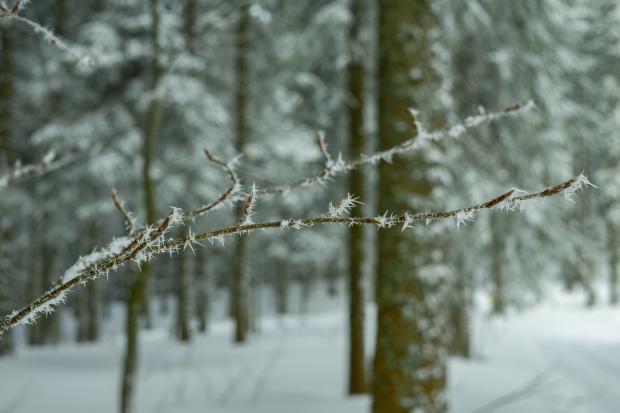заснеженные деревья в лесу