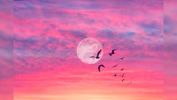 полнолуние, розовое небо, птицы
