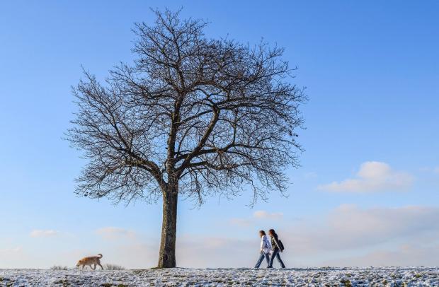 девушки на прогулке с собакой
