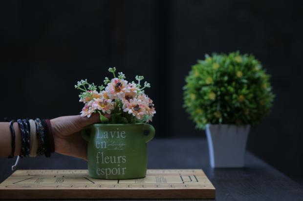 цветущий комнатный цветок в горшке