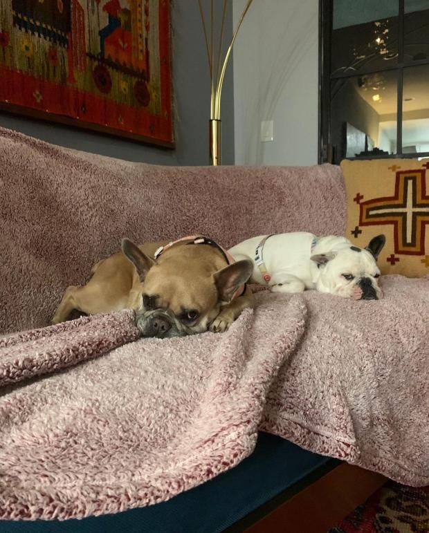 Собаки Леди Гаги