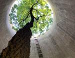 Дерево в заброшенной силосной башне