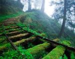 Железнодорожные пути в лесу Тайваня