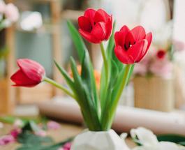 Что подарить возлюбленной на 8 марта: простые идеи презента для любимой дамы