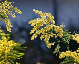 3 марта — самый счастливый день месяца: советы астрологов и нумерологов