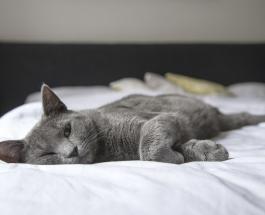 Знаете ли Вы почему кошки любят спать возле головы своего хозяина