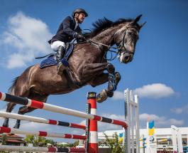 Федерация конного спорта отменяет турниры в Европе: опасный вирус массово убивает лошадей