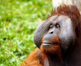 Обезьяны из зоопарка в Сан-Диего получили экспериментальную вакцину от коронавируса