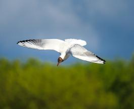 Неудачное приземление альбатроса попало на видео и развеселило пользователей сети