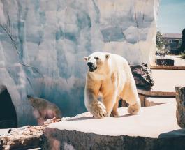 Белый медведь в отеле: необычная гостиница в Китае возмущает зоозащитников