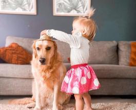 Трогательные фото золотистого ретривера ставшего лучшим другом 2-летней хозяйки