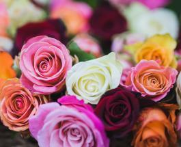 Знаете ли Вы: что символизируют розы разных цветов