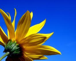 Оптимистичные жизнелюбы: 3 знака Зодиака которые не боятся трудностей
