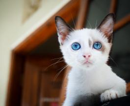 Забавные фото котов которые не любят позировать на камеру с хозяевами