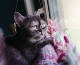 """Фото """"некрасивой"""" кошки которую не хотели забирать из приюта для животных"""