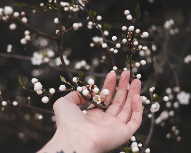 цветущие веточки в руке
