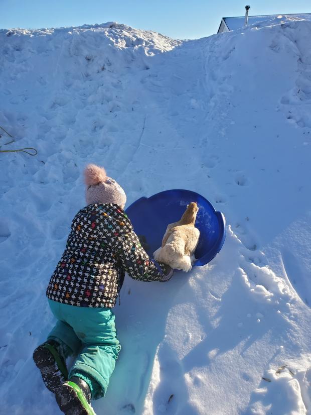 девочка и курица катаются с заснеженной горки