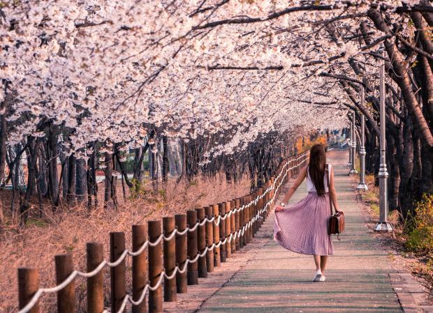 девушка в розовом платье идет по аллее с цветущими деревьями