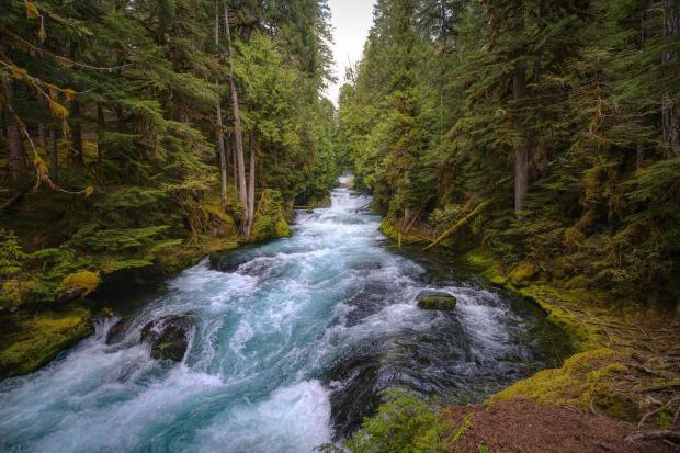 бурный речной поток среди лесов