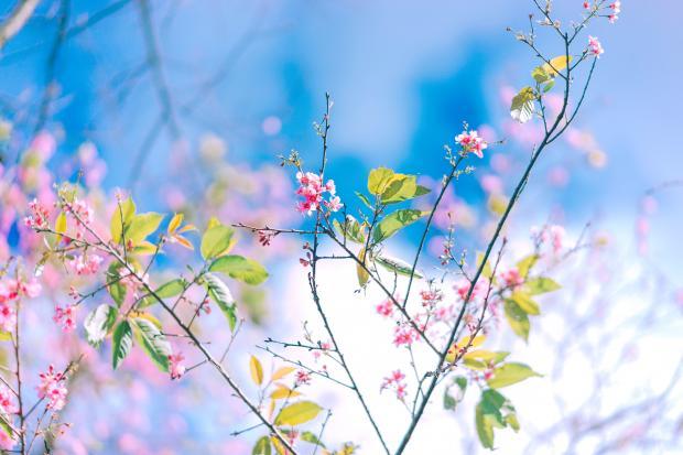 Цветущие ветви дерева