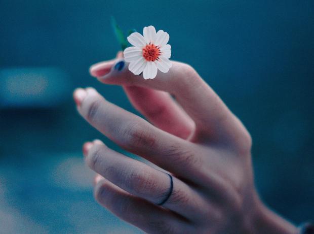 женская рука держит маленький белый цветок