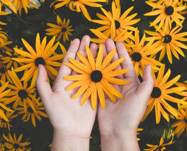 яркие желтые цветы и женские руки