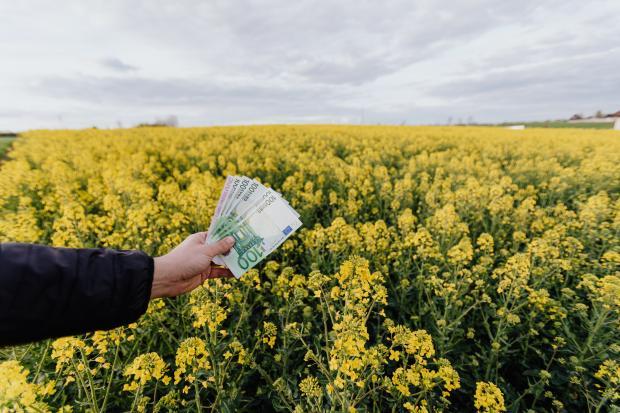 Деньги в руках на фоне цветущего поля