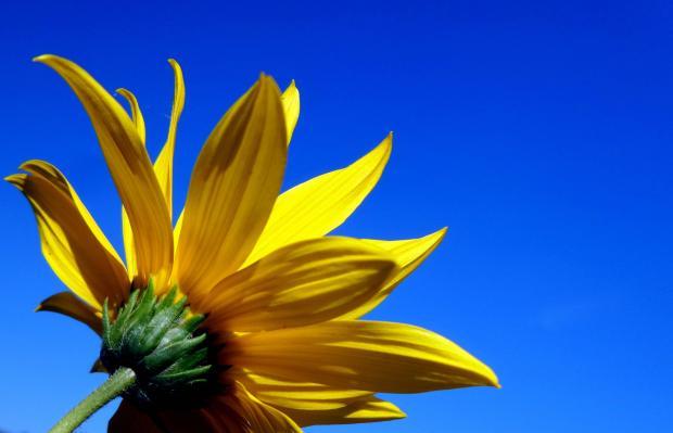цветок на фоне неба