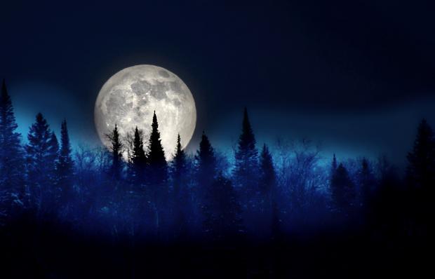 полнолуние,  ночное небо, верхушки деревьев