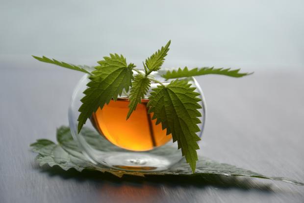 отвар и листья крапивы
