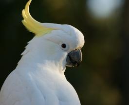 Милое видео про животных: теплые отношения попугая и щенка умилили пользователей сети
