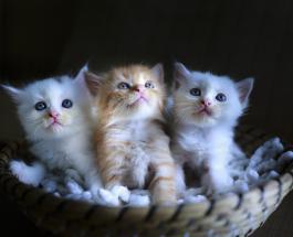 Вакцину от коронавируса для кошек разработала команда ученых из Европы и США