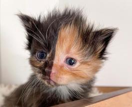 Кот Абрикос - звезда сети: фото животного с двухцветным окрасом шерсти