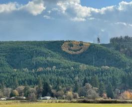Гигантский смайлик из деревьев в США: история и фото достопримечательности Орегона