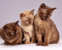 Милые фото животных: коты и собаки которые с любовью смотрят на своих хозяев