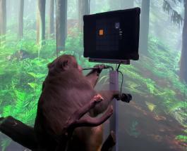 Видео обезьяны мысленно играющей в компьютерную игру показала компания Илона Маска