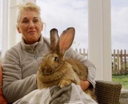 Кролик-рекордсмен Книги Гиннесса похищен: хозяйка предлагает крупную сумму за его возвращение
