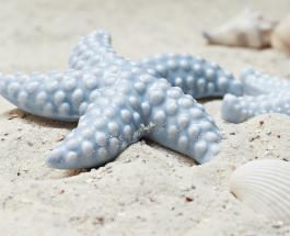На пляже Австралии найдена морская звезда с очень необычным внешним видом