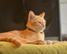 Милые фото животных: кот по кличке Картошка стал лучшим другом больного дедушки