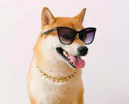 Пушистые мастера маскировки: забавные фото собак овладевших навыком прятаться