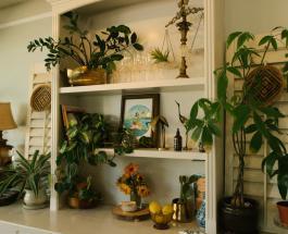 Удобрение для роста комнатных растений из двух ингредиентов: рецепт