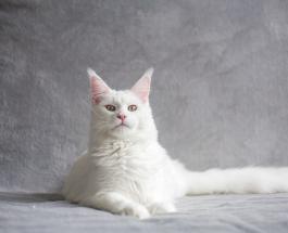 Впечатляющие фото больших котов которые ведут себя как маленькие котята