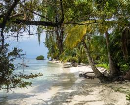 """""""Итальянский Робинзон Крузо"""" покинет необитаемый остров на котором прожил 32 года"""